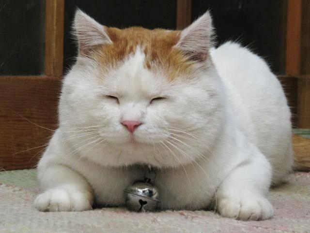 买猫是去猫舍还是宠物店图片