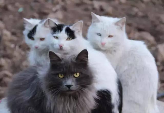 一尾猫舍的猫咪怎样图片