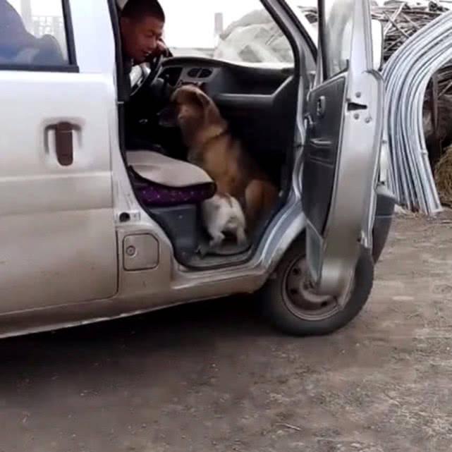 原创 狗狗和兔子做了同伙,主人要带狗狗回家时,兔子的行为太鸡贼了