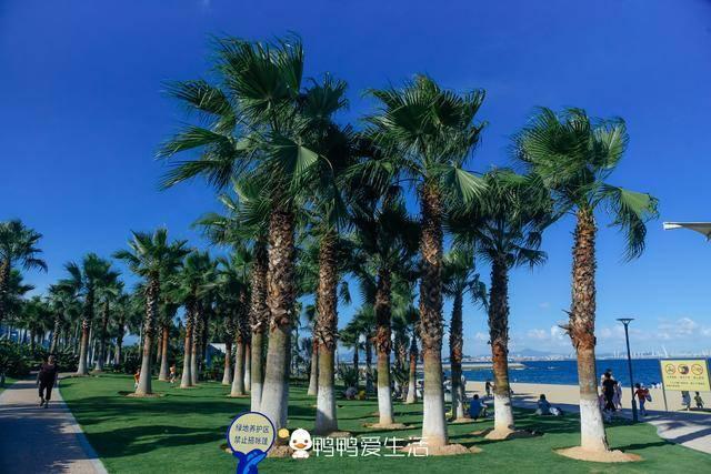 原创             厦门岛外绝美生态公园,有浪漫滨海沙滩,还能运动锻炼免费开放!