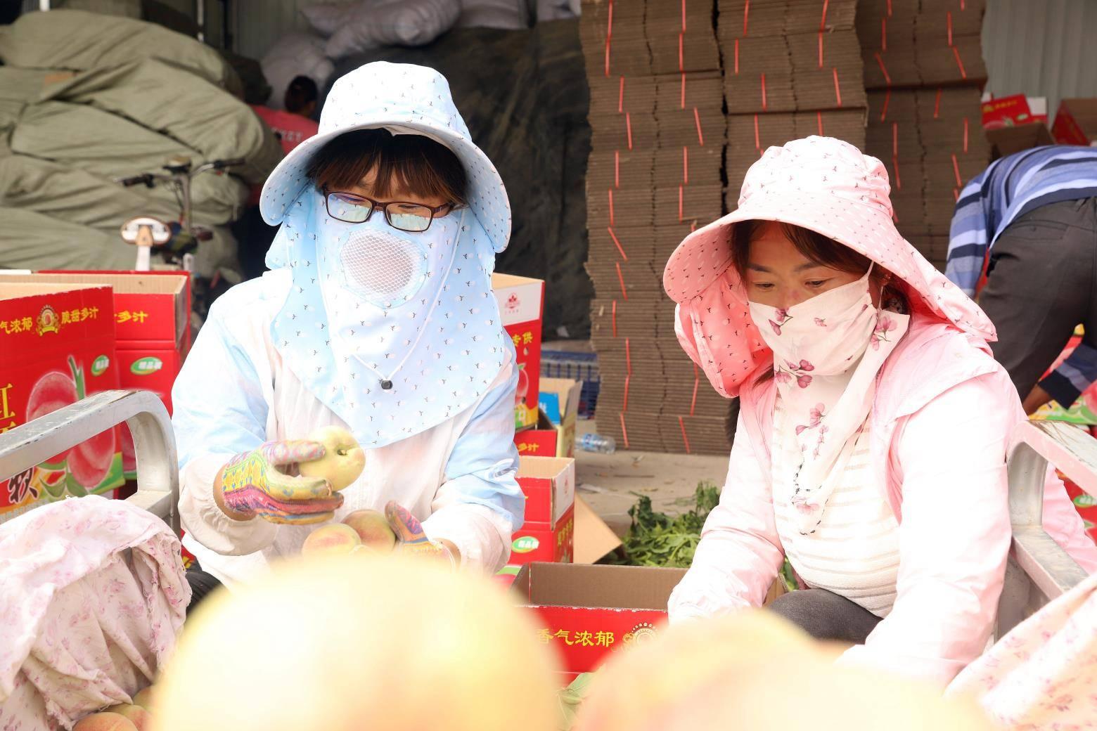 夏县胡张乡 5万亩鲜桃采摘销售获丰收