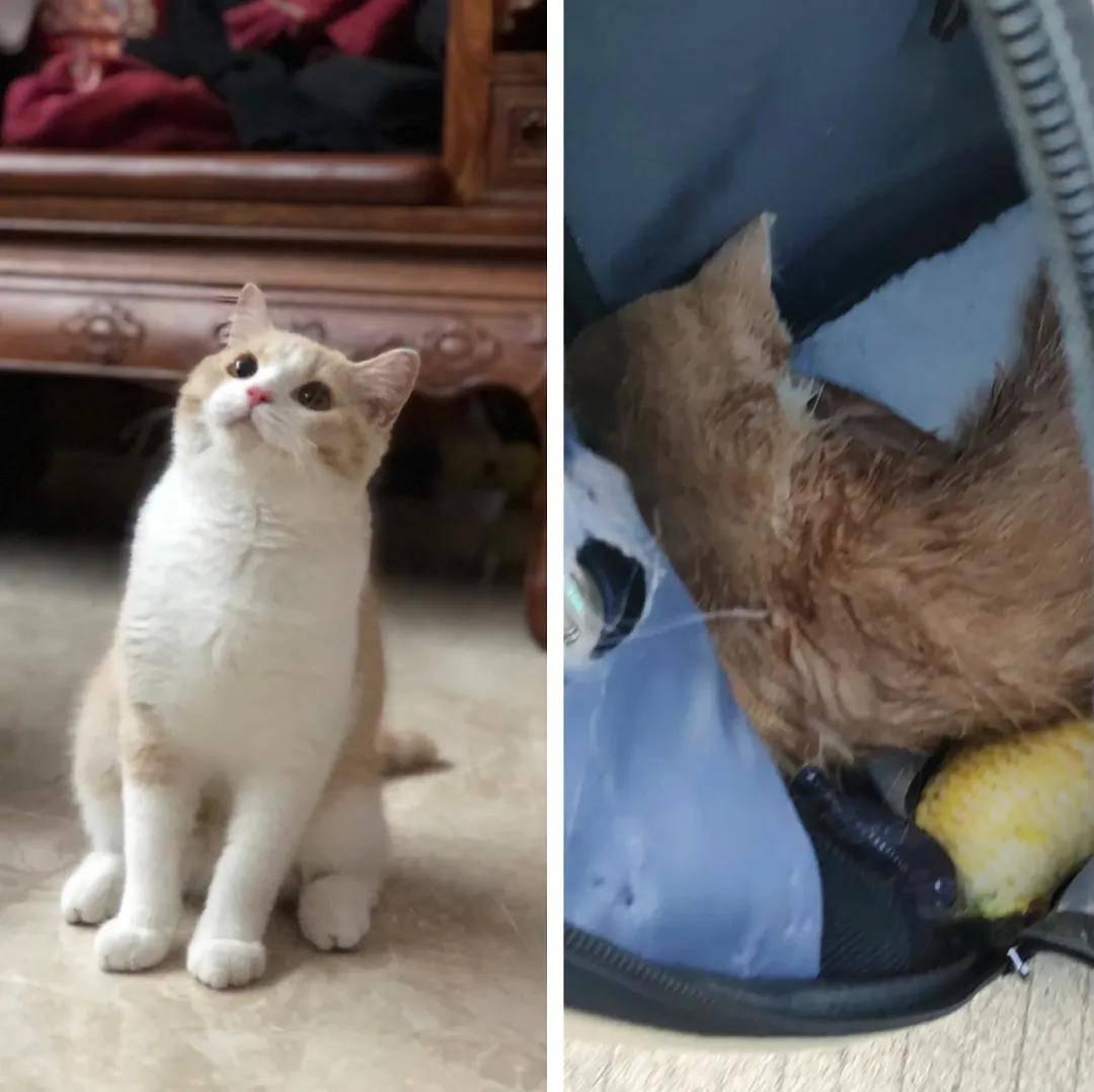 为了多赚几十块钱,顺风车司机闷死了我的猫