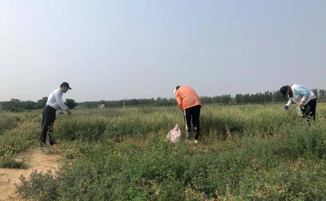 考察组分析了烈日下的红豆草品种