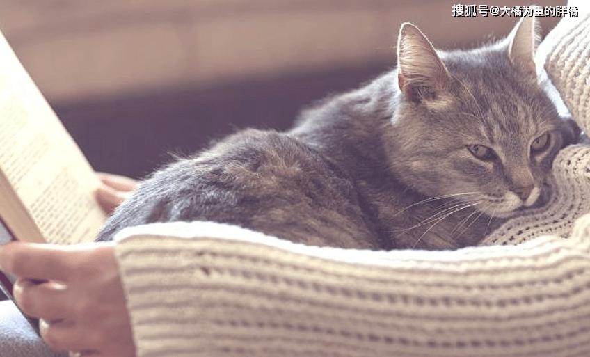 """原创 猫咪也会给家人""""排名"""",唯有取得信托才气靠近它,你是第几位?"""
