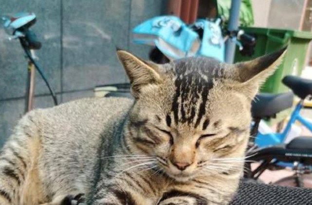 原创 猫咪天天守着摩托等主人回家,邻人说它超乖,主人欲哭无泪