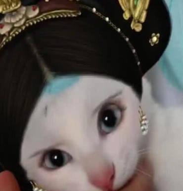 原创 猫咪被主人带去化妆,看到画好的妆容,网友纷纷叹息美得不像话