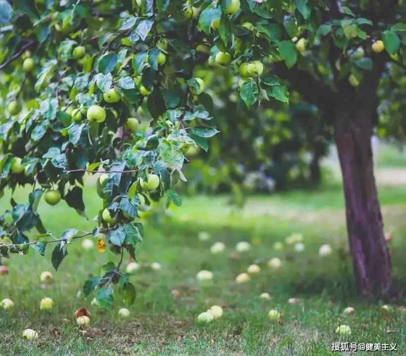夏季正在减肥的你,应该知道吃什么水果更容易保持好身材! 锻炼方法 第1张