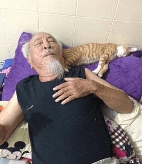 原创 送了一只橘猫给爷爷,再次回家忍不住流泪了:像极了已往的自己
