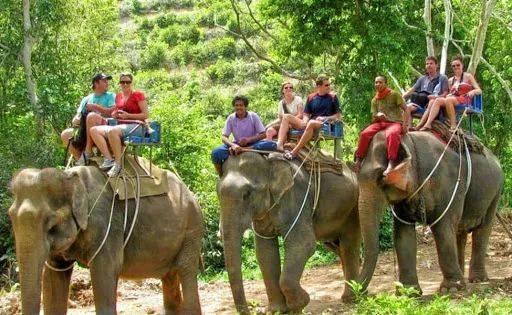 原创 一头有身的大象,站在河中死去