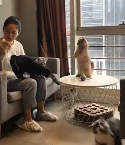 一群猫咪只有它最显眼,看到它的动作网友惊呼:太聪明了!