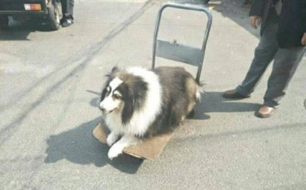 原创 狗狗用一生陪同主人,老了病恹恹遛不动弯,老主人善待它的余生
