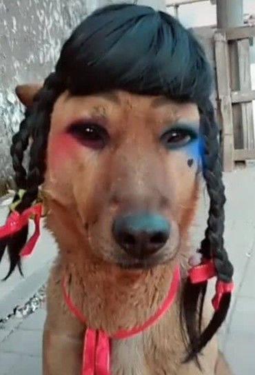 原创 狗狗被主人戴上假发,再加上相机的这特效,差点把网友笑晕过去