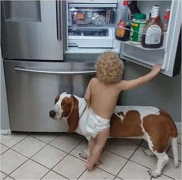 狗狗助攻小宝宝偷零食,主人突然下班回来时,狗狗的反应棒极了