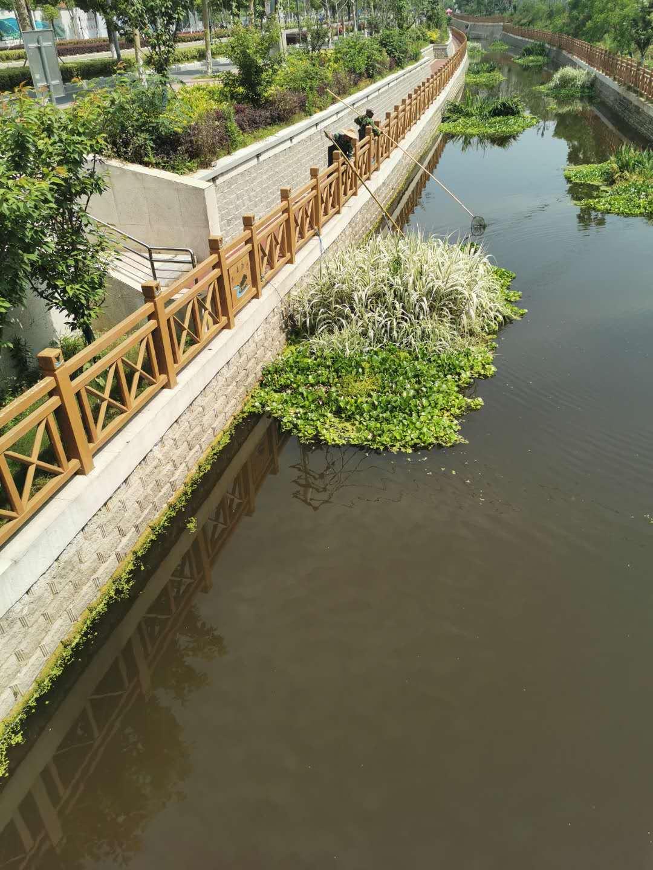 马群社区组织清理河道工作