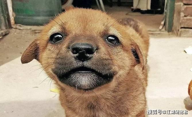 原创 主人天天给狗狗说下面5句话,狗狗会越来越爱你,快来试试