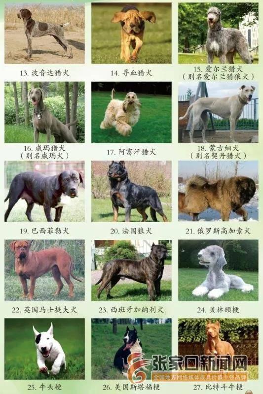 莱州红犬(别名朱桥红),黑狼犬,细犬,四川青川犬,四川凉山犬,美国恶霸图片