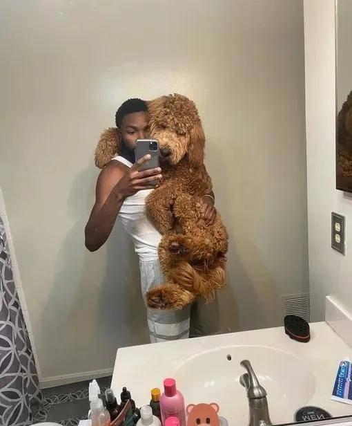 """养了一只超萌小""""泰迪"""",可五个月后,这个头熊是怎么回事?"""