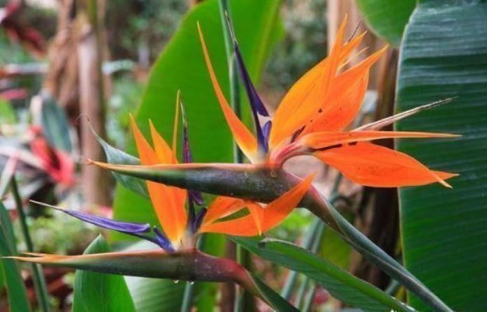 养花就养个花期长的,花大色艳,花色繁多易爆盆,娇艳欲滴