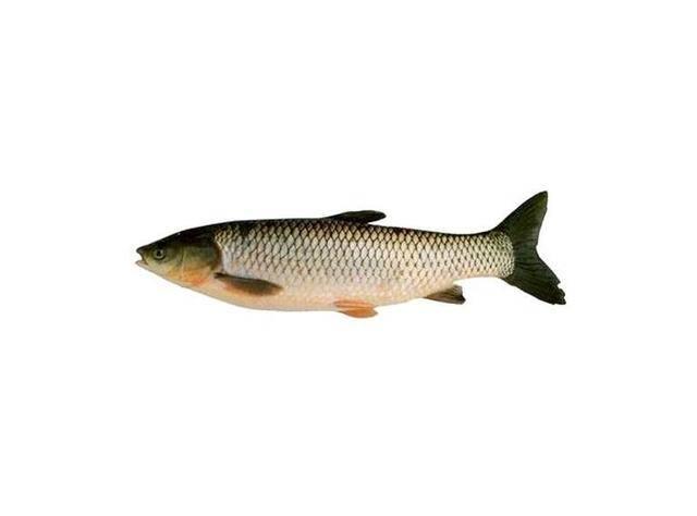 """因为""""吃鱼"""",男子左肝被""""掏空"""",布满虫卵!鱼还能不能吃?"""