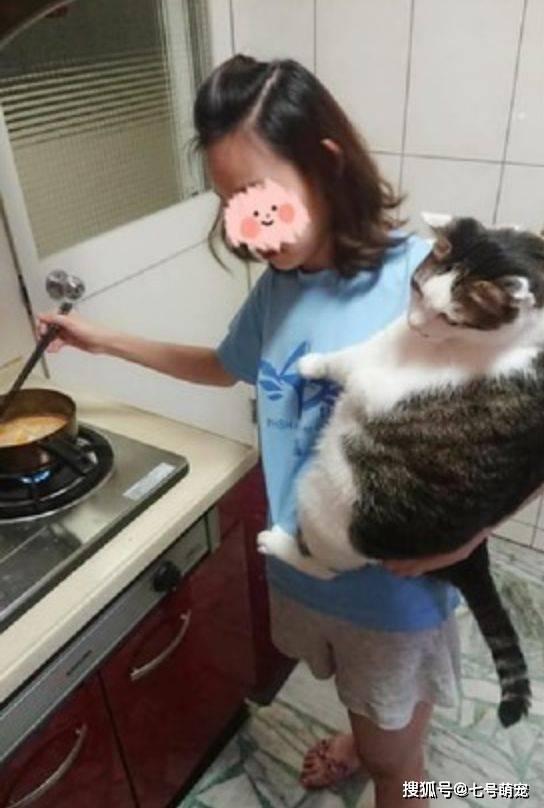 女子正在做饭,猫咪吵着要看,她单手抱起11kg肥猫煮饭,臂力惊人