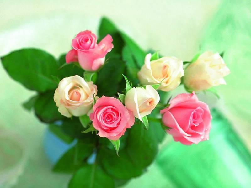 八月中旬,大喜将至,喜迎桃花,朝朝暮暮,爱情甜美的四大生肖