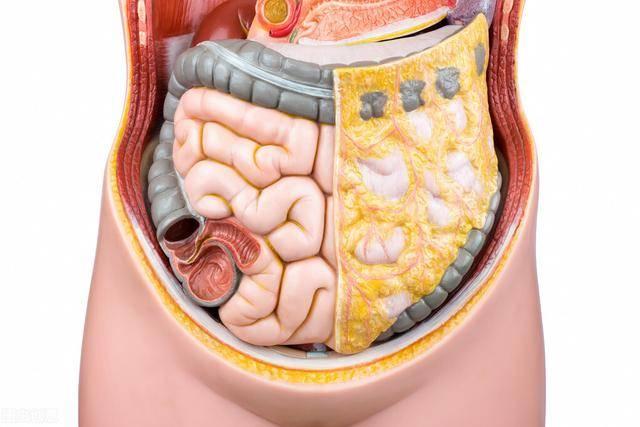 降低内脏脂肪的4个方法,帮你平坦腹部,身材暴瘦下来!