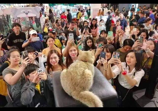 网红猫所到之处,都吸引众多粉丝围观拍照,猫:我这该死的人气!