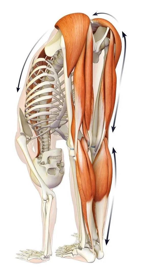 九个深度拉伸动作,改善大腿柔韧性,腿部肌肉再也不紧绷了_地面