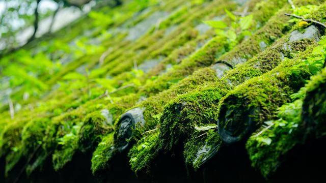 何必羡慕顾佳的茶山?23℃的仙山茶乡就在雅安!