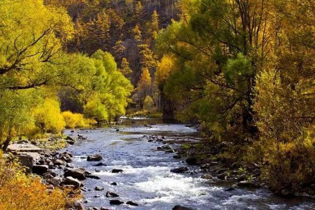 有一种美,叫阿尔山的秋!