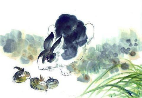 属兔的人似乎都是心肠善良慈悲他们性格