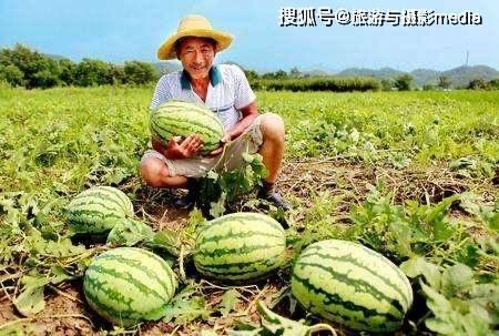 原创             河北有一个县城,所产的西瓜又大又甜,网友:一定要去尝尝!