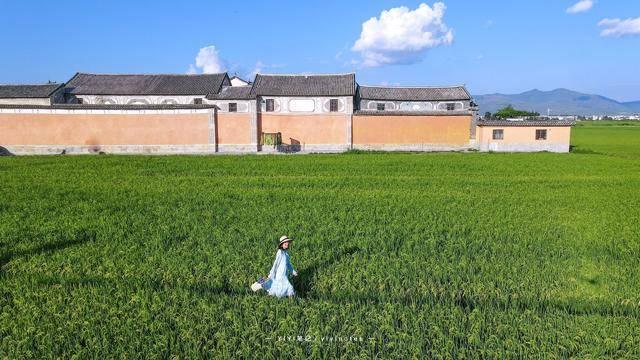 原创             一块稻田也能成为热门打卡地?大理这处田园,每年吸引无数游客
