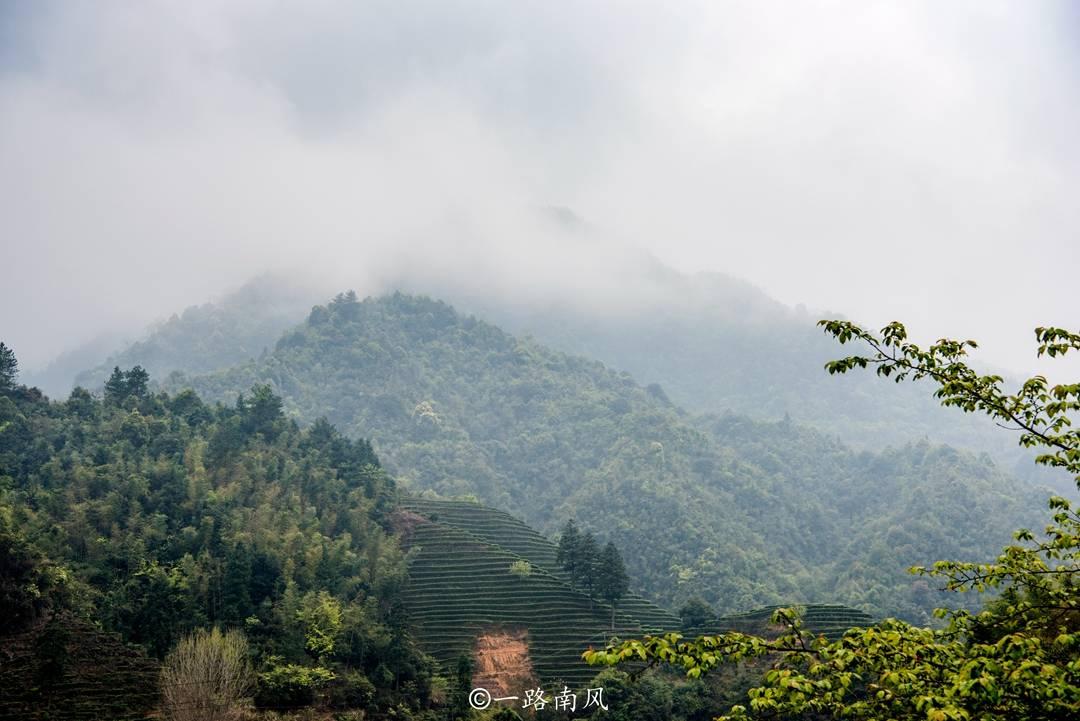 湖南南部有片神秘的原始森林,经常雾气弥漫看不清,曾因蟒蛇成名