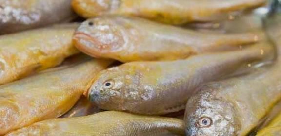 这种炸鱼不破皮 不粘锅 炸鱼好吃悦目 吃起来更有营养...