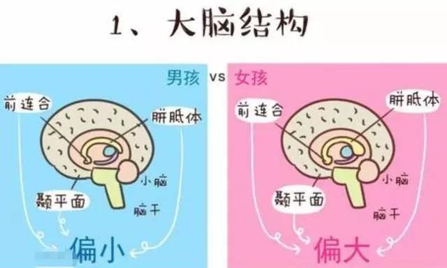 男孩大脑开发