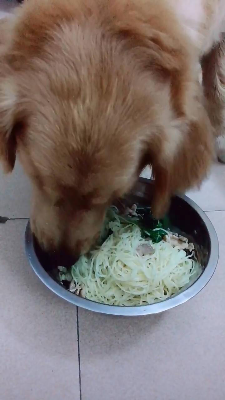 原创 狗狗沉迷于吃肉,面对盆中面条毫无食欲,逼得主人使大招对付