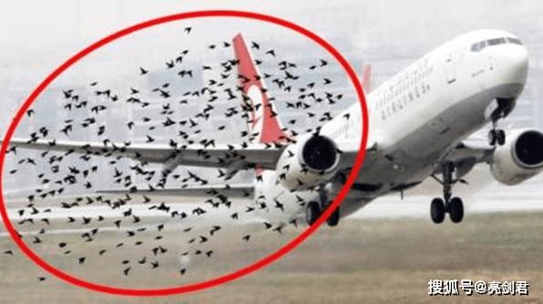 飞机撞鸟有多恐怖,4斤重飞鸟相当于155mm炮弹,麻雀也能击落客机