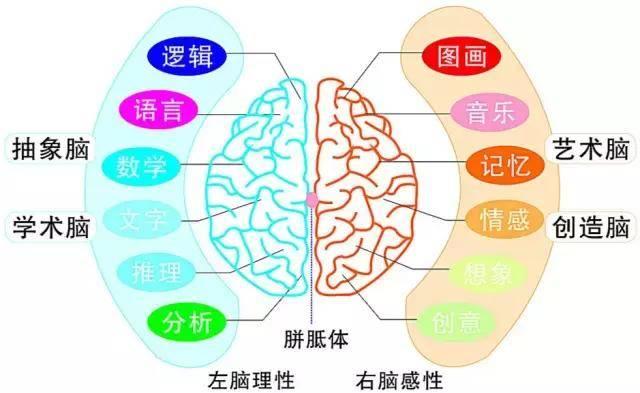 右脑图像记忆