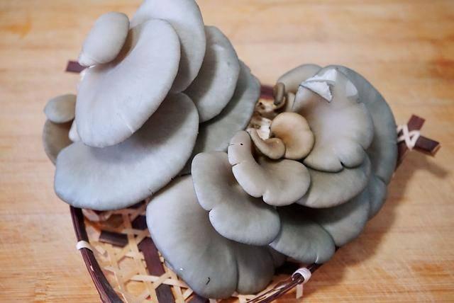 降温后进补要给肠胃来点动力,炒菜记得常吃平菇,嫩滑鲜美防便秘
