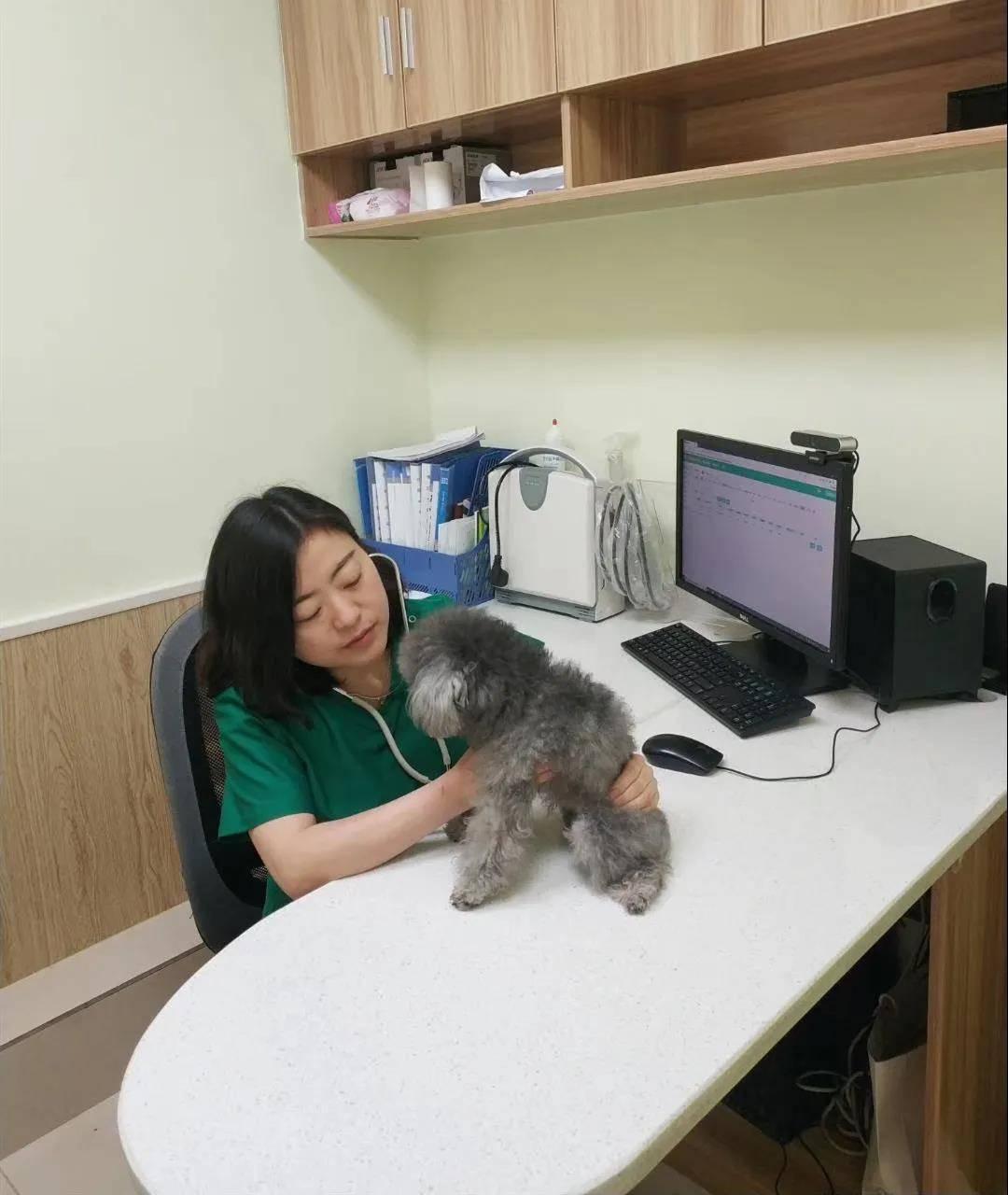 兽医既医治宠物伤痛,也疗愈人心