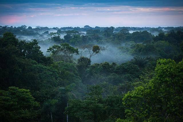 动物天堂亚马逊:鸟类正在快速消失,科学家警告:下一个就是人类
