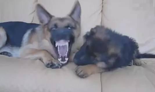快别让狗生娃了……哈哈哈哈哈