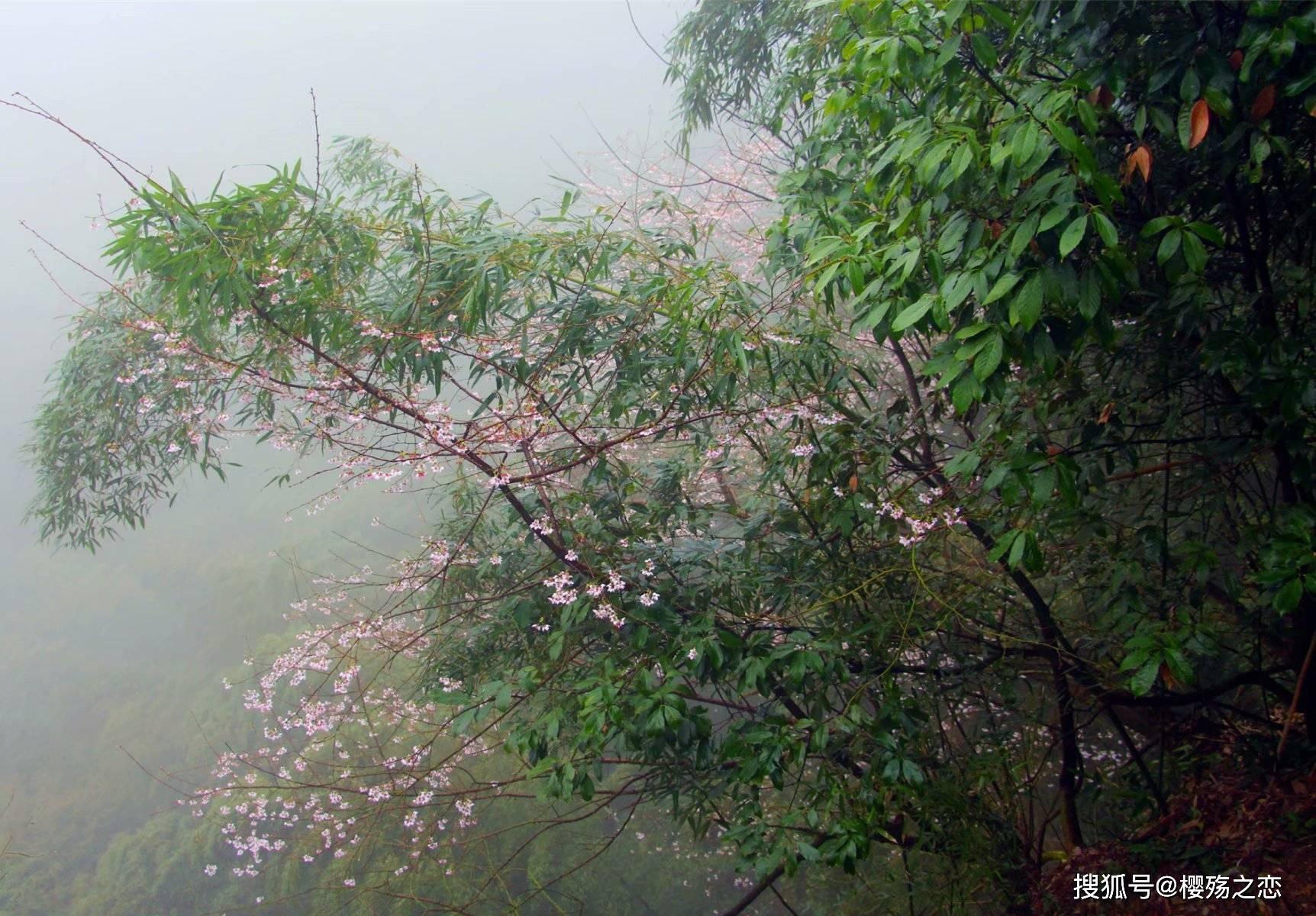 """原创             浙江省首个世界自然遗产,以""""三爿石""""著称,连徐霞客都情有独钟"""