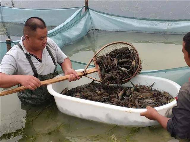 探访本土龙虾网红 共商品牌培育之路