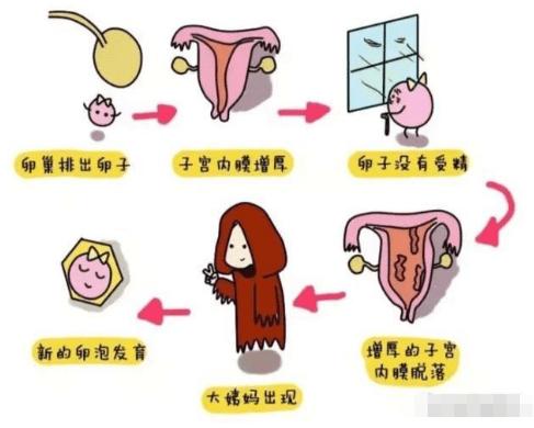 产后月经每次来12天