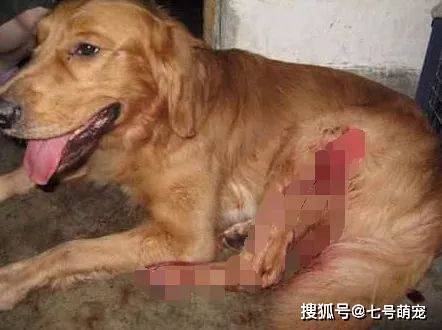 狗狗咬伤孩子,主人准备把狗杀掉,查看监控后,一家人感动得哭了(图3)
