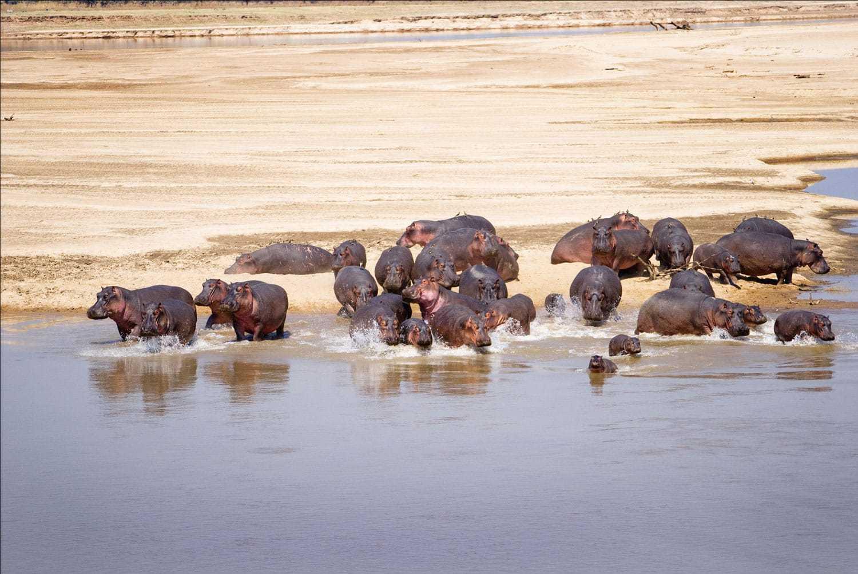 坦桑尼亚恩戈罗恩赢咖4测速戈罗国家公园