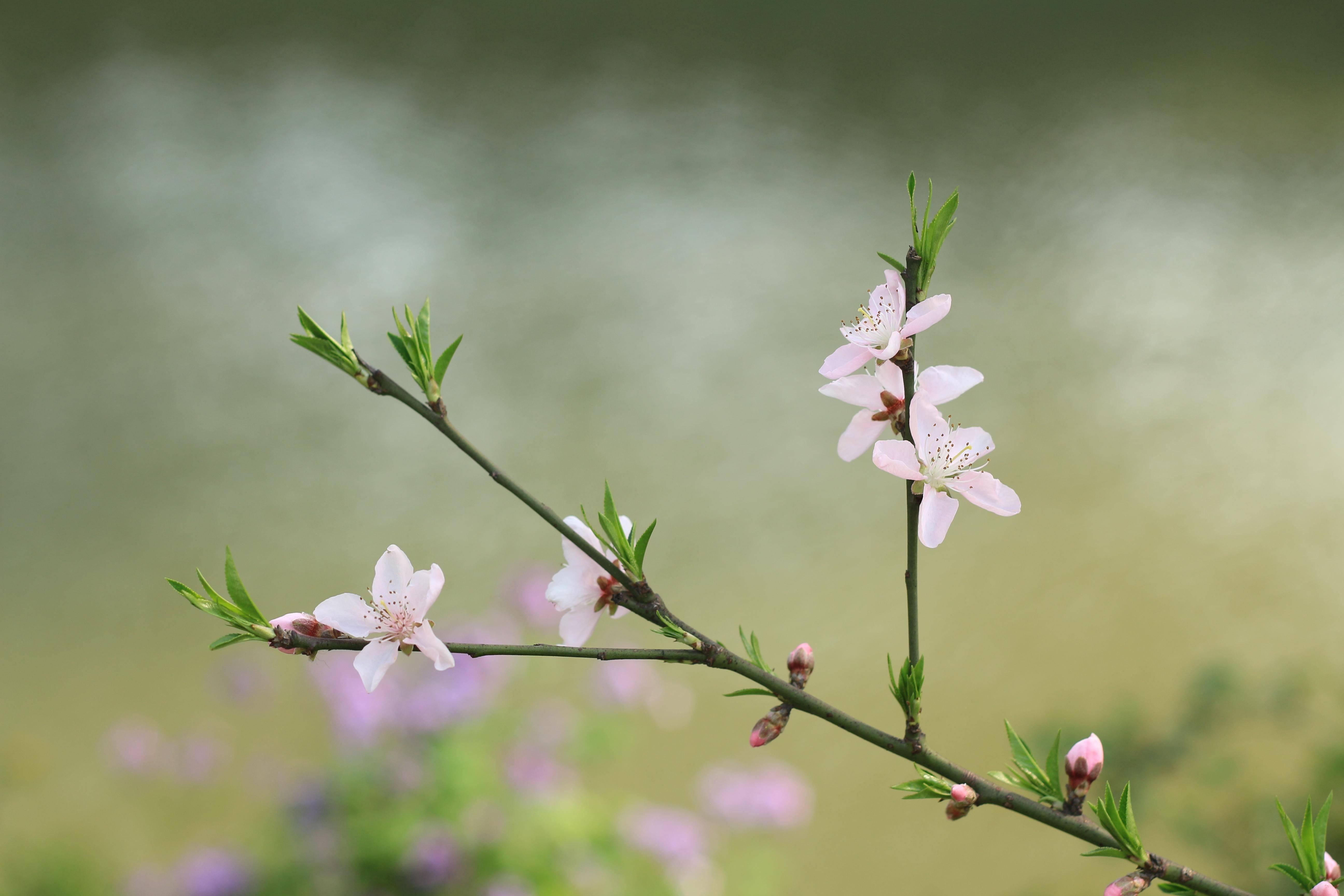 浙江诗人佩佩 美在四季