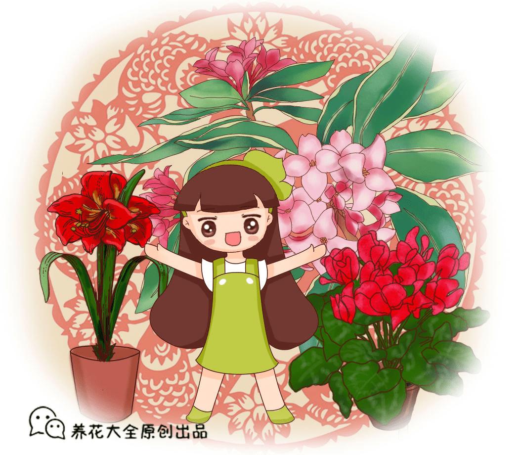 """最热门的""""年宵花"""",春节随便养一盆,热闹又喜庆!"""